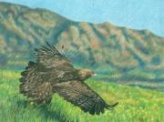 Eagles Drawings - Timeless Freedom by Rebecca Steelman
