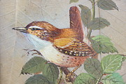 Little Birds Paintings - Tiny  And Perched by William Ohanlan