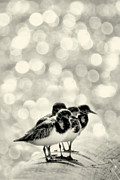 Shore Birds Posters - Tiny Birds Poster by Jennifer Eden