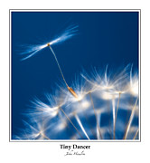 Potential Framed Prints - Tiny Dancer - Bordered Framed Print by John  Hamlon