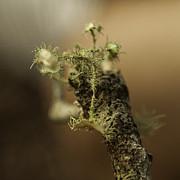 Lynn Palmer - Tiny Florida Lichen