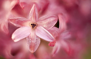 Nature Macro Posters - Tiny Flower 2 Poster by Scott Norris
