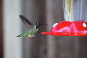 Tiny Bird Photos - Tiny Flying Machine by Carol Groenen