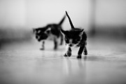 Kitty Digital Art - Tiny Terrorists by Victor Bezrukov