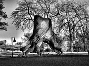 Tree Stump Photos - Tip Toeing Stump by Jimmy Ostgard