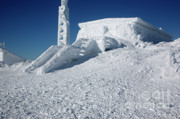 Alpine Zone Photos - Tip Top House - Mount Washington New Hampshire  by Erin Paul Donovan