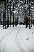 Winter Trees Photos - Tire Tracks in Snow by Scott Sawyer