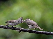 Wingsdomain Art and Photography - Titmouse Feeding Time