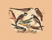Birds - Tits by Eric Kempson