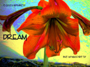 Calla Lilly Digital Art Prints - To Dream Print by Irma BACKELANT GALLERIES