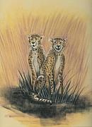 Cheetah Pastels Framed Prints - To Gather We Survive Framed Print by David Bishop