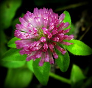Childlike Metal Prints - To Remember Clover Metal Print by Karen Wiles
