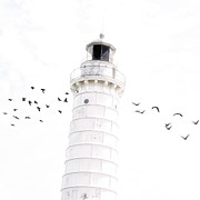 Joel Witmeyer - To the Lighthouse