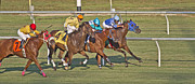 Thoroughbred Horse Posters - To the Line Poster by East Coast Barrier Islands Betsy A Cutler