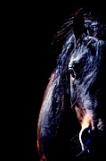 Horses Posters - To The Soul Poster by Emily Stauring