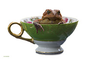 Teacup Photo Acrylic Prints - Toad In A Teacup Acrylic Print by Ron Jones