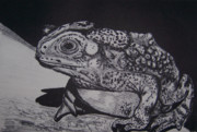 Lithograph Mixed Media Framed Prints - Toad Framed Print by Jude Labuszewski