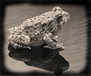 Toad Framed Prints - Toad Framed Print by Tony Ramos