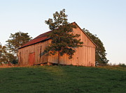 Farming Barns Prints - Tobacco Barn II in color Print by JD Grimes