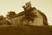 Farming Barns Prints - Tobacco Barn II in Sepia Print by JD Grimes