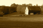 Farming Barns Prints - Tobacco Barn in Sepia Print by JD Grimes