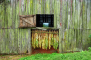 Wood Digital Art Originals - Tobacco Barn by Ron Morecraft