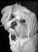 Pet Portraits Acrylic Prints - Toby by Enzie Shahmiri