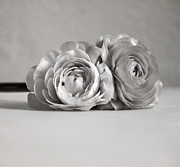 Black And White Flowers Posters - Together Poster by Kristin Kreet