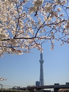 Communications Tower Prints - Tokyo Sky Tree Print by Hisako Hatakeyama