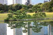 Pond In Park Posters - Tokyo Trees Reflection Poster by Carol Groenen