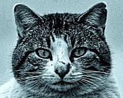 TONY GRIDER - Tom Cat