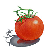 Vegetables Prints - Tomato Print by Irina Sztukowski