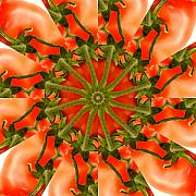 Kaleidoscopic Posters - Tomato Kaleidoscope Poster by Rolf Bertram