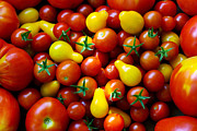 Sell Metal Prints - Tomatoes Background Metal Print by Carlos Caetano