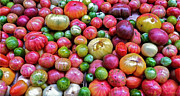 Vegetables Originals - Tomatoes by Bill Owen