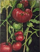 Terry Godinez - Tomatoes From My Garden