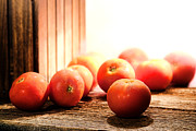 Ripe Photo Metal Prints - Tomatoes in an Old Barn Metal Print by Olivier Le Queinec