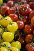 Garden Grown Metal Prints - Tomatoes on the Vine Metal Print by Heather Applegate
