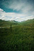 Tundra Prints - Tombstone Mountain Print by Priska Wettstein