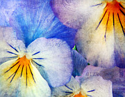Purple Pansy Prints - Tones of Blue Print by Darren Fisher
