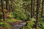 Inside Passage Prints - Tongass National Forest Print by John Greim