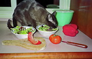 Tonkinese Posters - Tonkinese Cat Eating Salad Poster by Sally Weigand
