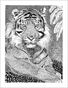 Pen And Ink Framed Prints Prints - Tony the Tiger Print by Jack Pumphrey