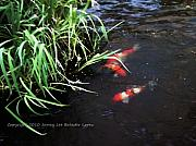 Two Fish Digital Art - Too Koi by Jamey Balester