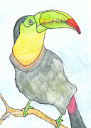 Toucan Originals - Tooooouc by Michael Mooney