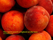 Peaches Photo Prints - Top Of The Tree Print by Ian  MacDonald