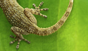 Reptile Photos - Top Reptile by Izlemus