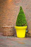 Basket Pot Prints - Topiary Print by Tom Gowanlock