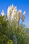 Topsail Island Photos - Topsail Grasses by East Coast Barrier Islands Betsy A Cutler