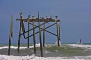 Topsail Island Photos - Topsail Ocean City Pelicans by East Coast Barrier Islands Betsy A Cutler
